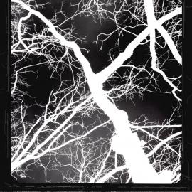 Lightning Never Strikes Twice-8x10 Fine Art Print
